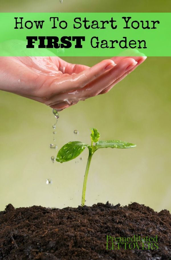 How To Start Your First Garden   Tips For First Time Gardeners On How To  Start