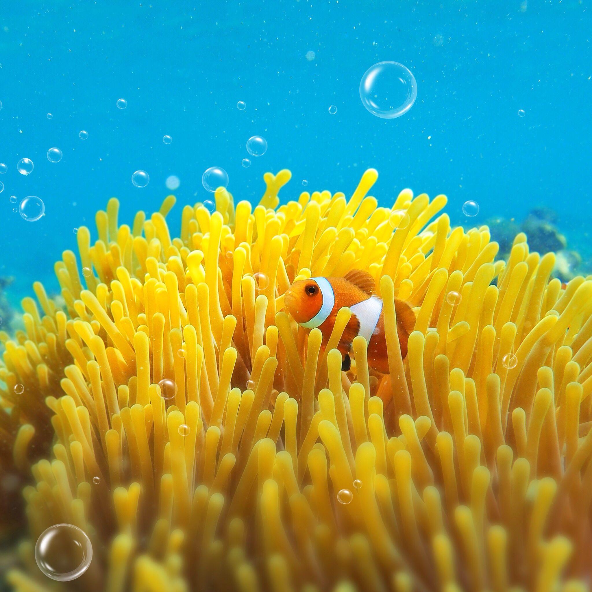 Sea Anemone Iphone Wallpaper Iphone Wallpaper Underwater Wallpaper