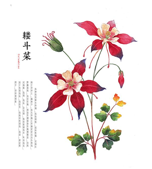 Water Colour Flower On Behance Watercolor Plants Flower Drawing Watercolor Flowers