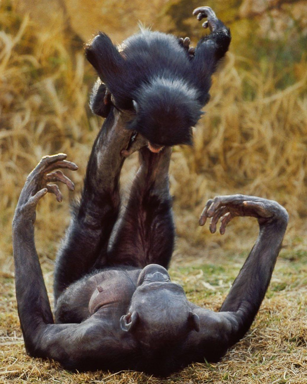 Chimpanzee Mom Playing With Baby Tag Someone You Love