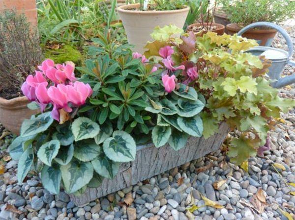 choisir une plante pour jardini re quelques id es et astuces g raniums. Black Bedroom Furniture Sets. Home Design Ideas