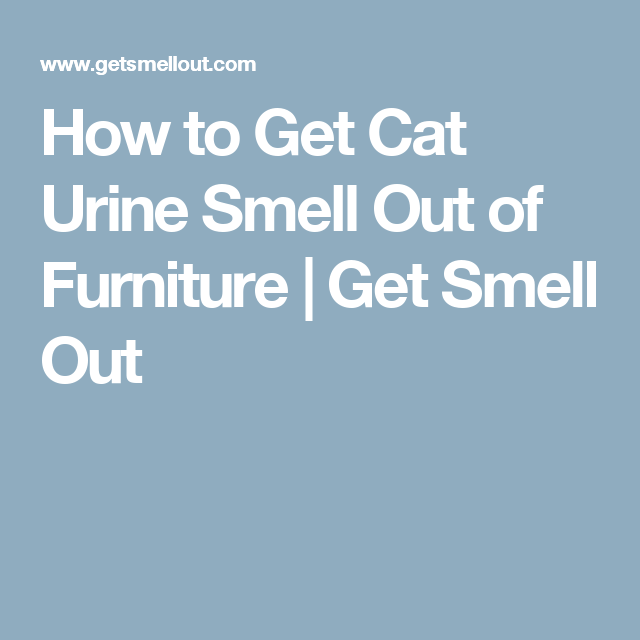 How To Get Cat Urine Smell Out Of Furniture | Get Smell Out  #CatSprayingProducts