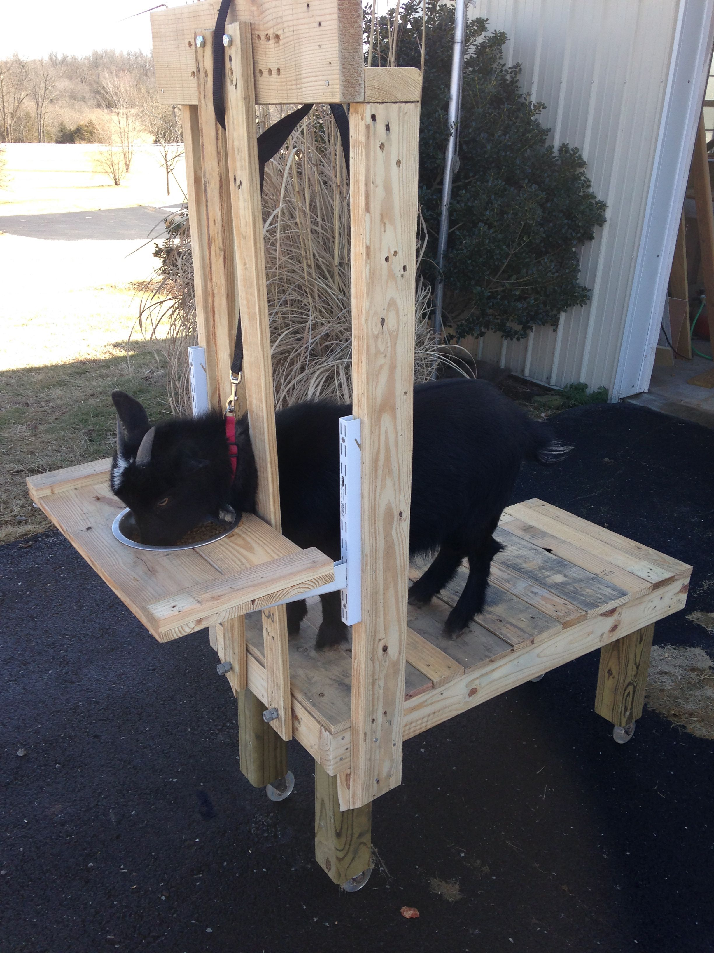 Adjustable Goat Milking Stand Built From Pallets