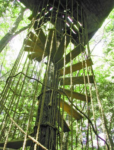 Tree House Spiral Staircase With Rope