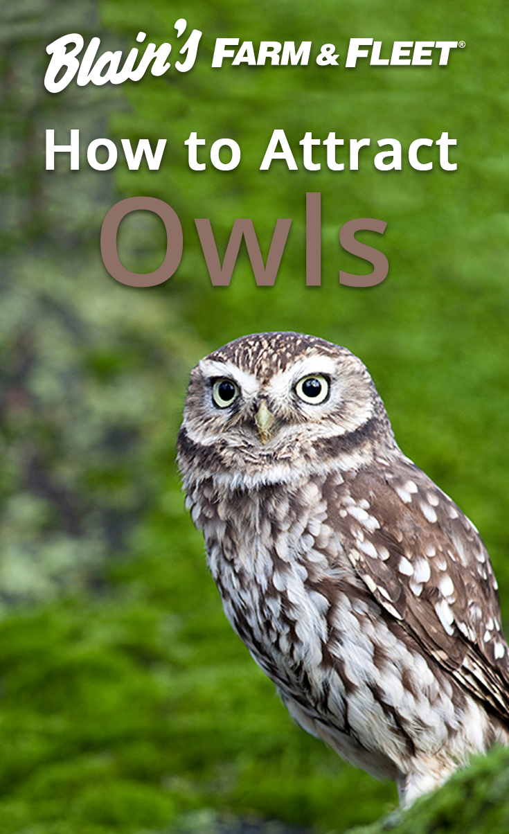 how to attract owls owl woods and the o u0027jays