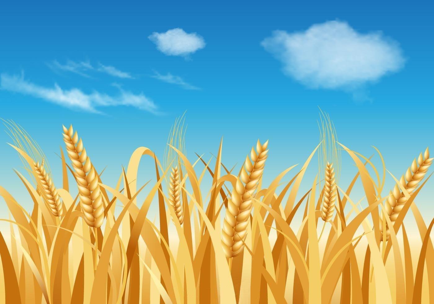 Wheat Stalk Landscape Landscape Background Vector Art
