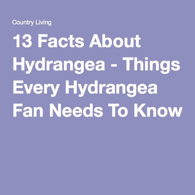 13 Facts About Hydrangea - Things Every Hydrangea Fan Needs To Know