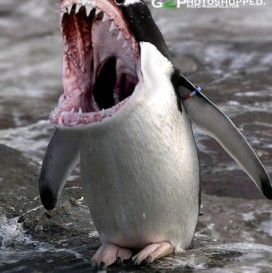 Funny Animals Mixed Together   Animals   Funny Animals ...