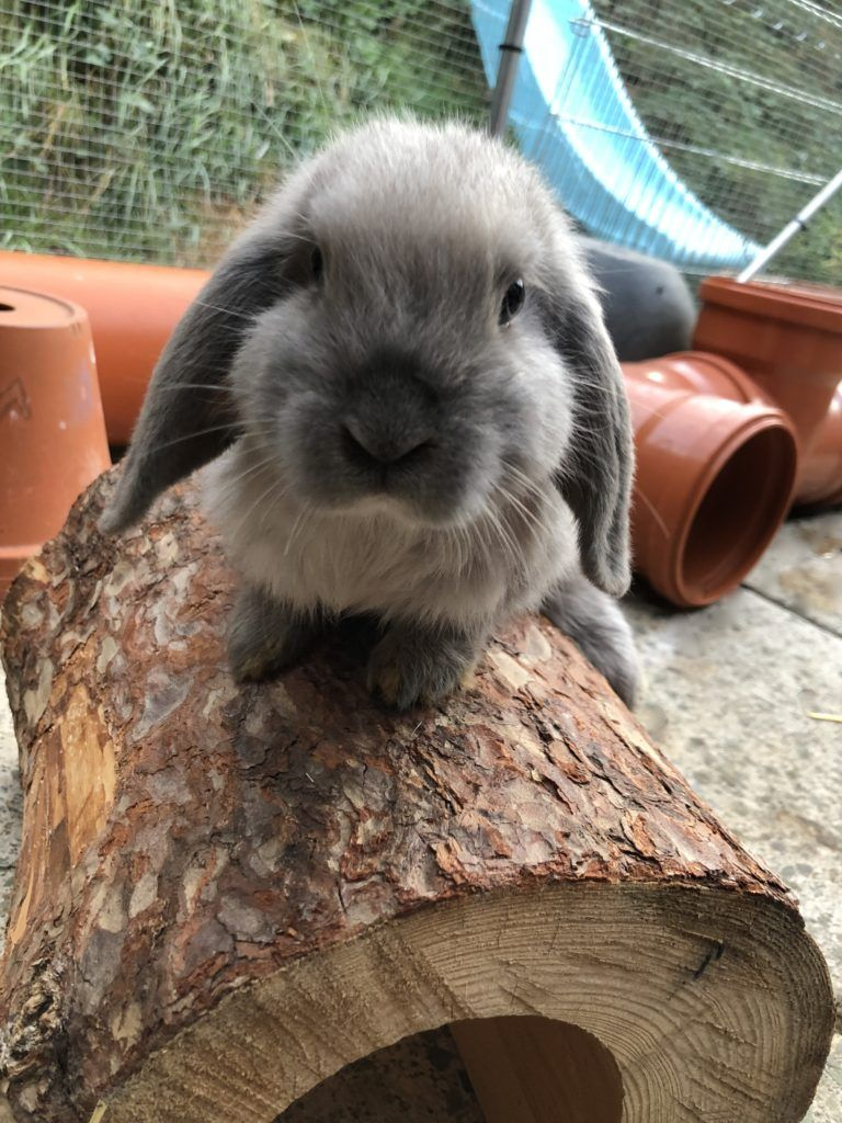 Freigehege Und Stall Zwergwidder Kaninchen Freigehege Kaninchen