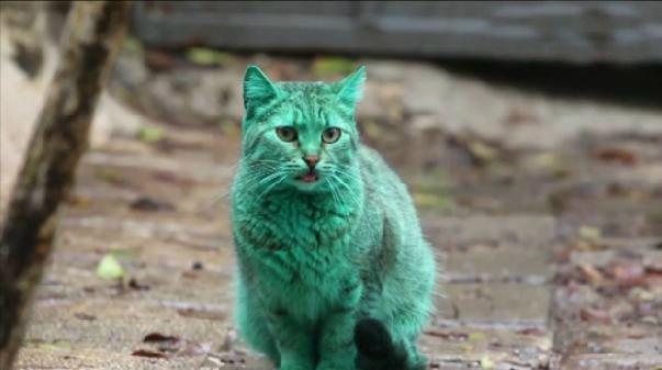 Il mistero del gatto verde in Bulgaria | NanoPress