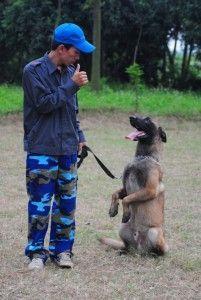 Cách huấn luyện chó hay từ trung tâm bác sĩ thú y