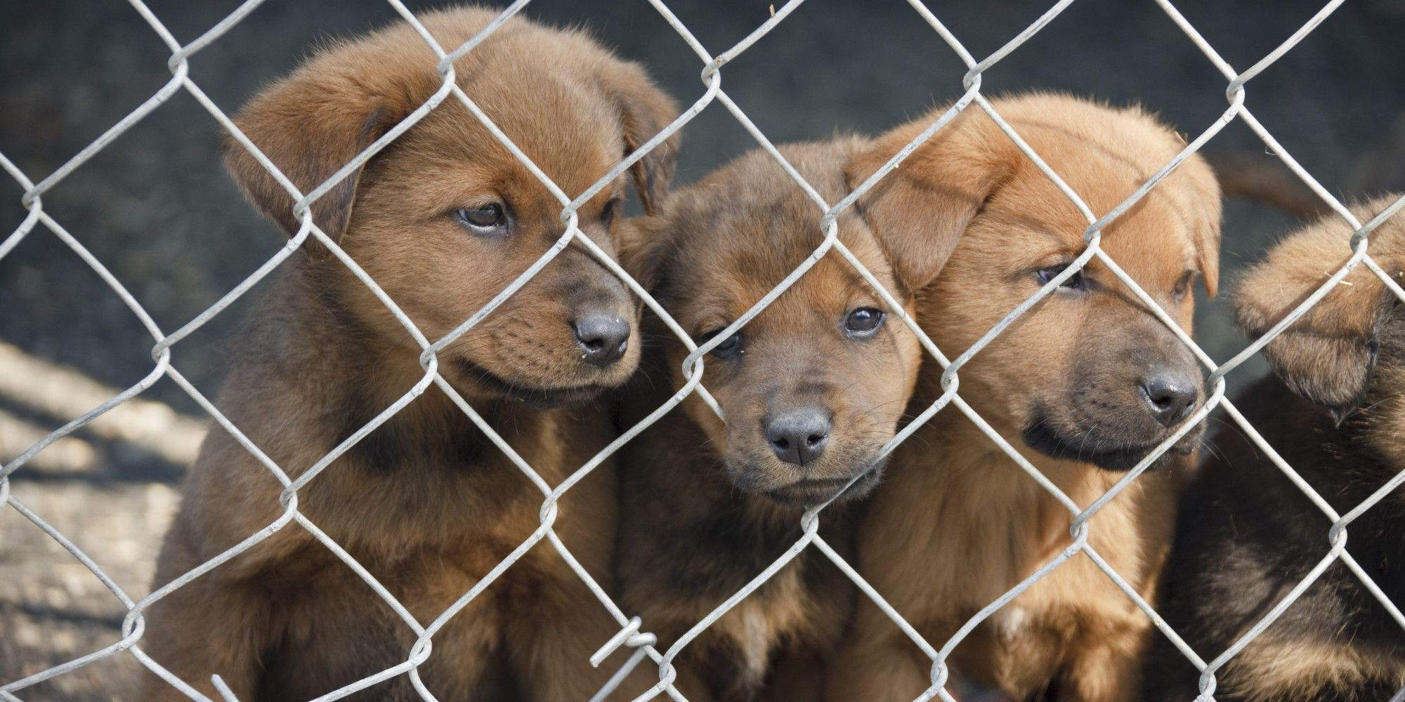 Anti Puppy Mill Movement Gets Another Big Win Puppy Mills