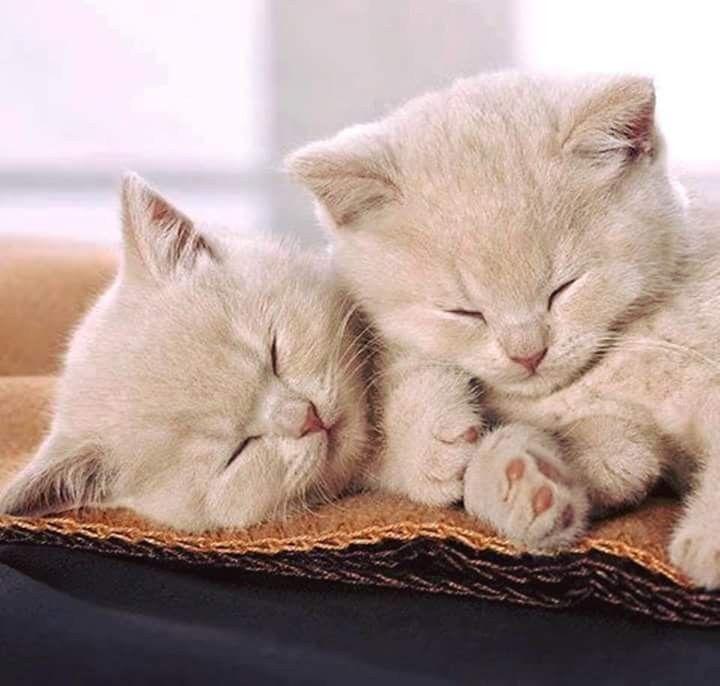 Картинки красивые спокойной ночи кошки