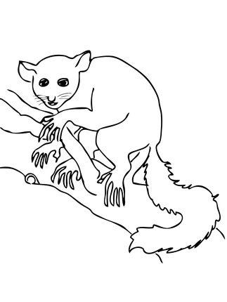 Aye Aye Lemur Coloring Page Coloring Pages Aye Aye Lemur
