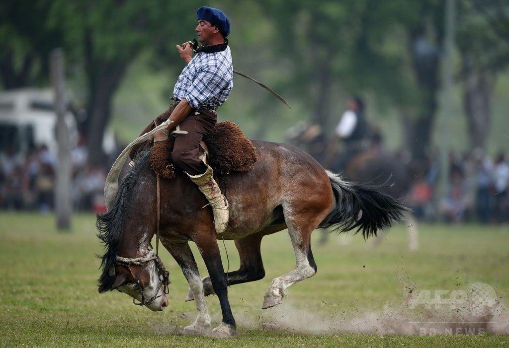 「ガウチョ」の保存目指してロデオショー、アルゼンチン 国際ニュース:AFPBB News