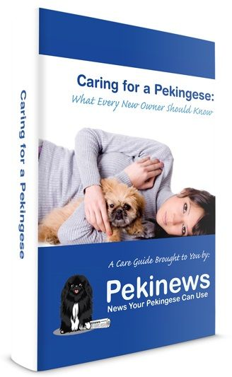 the Best Parent a Pekingese can ever have! This is