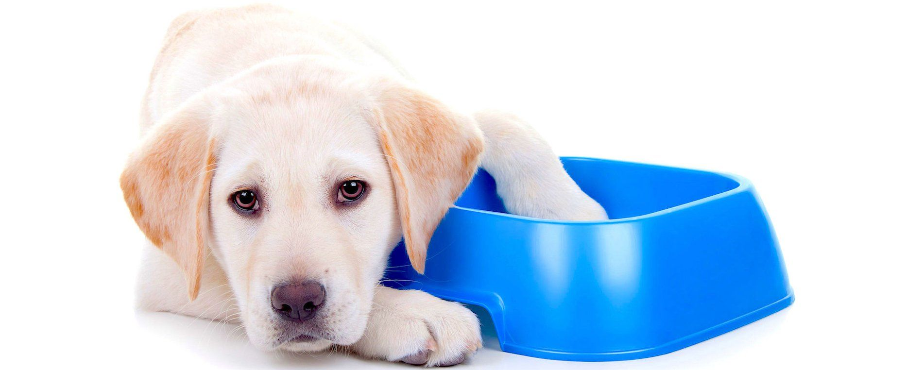 Dog Food Recalls 2019 2020 Is Your Brand On This List Dog Food