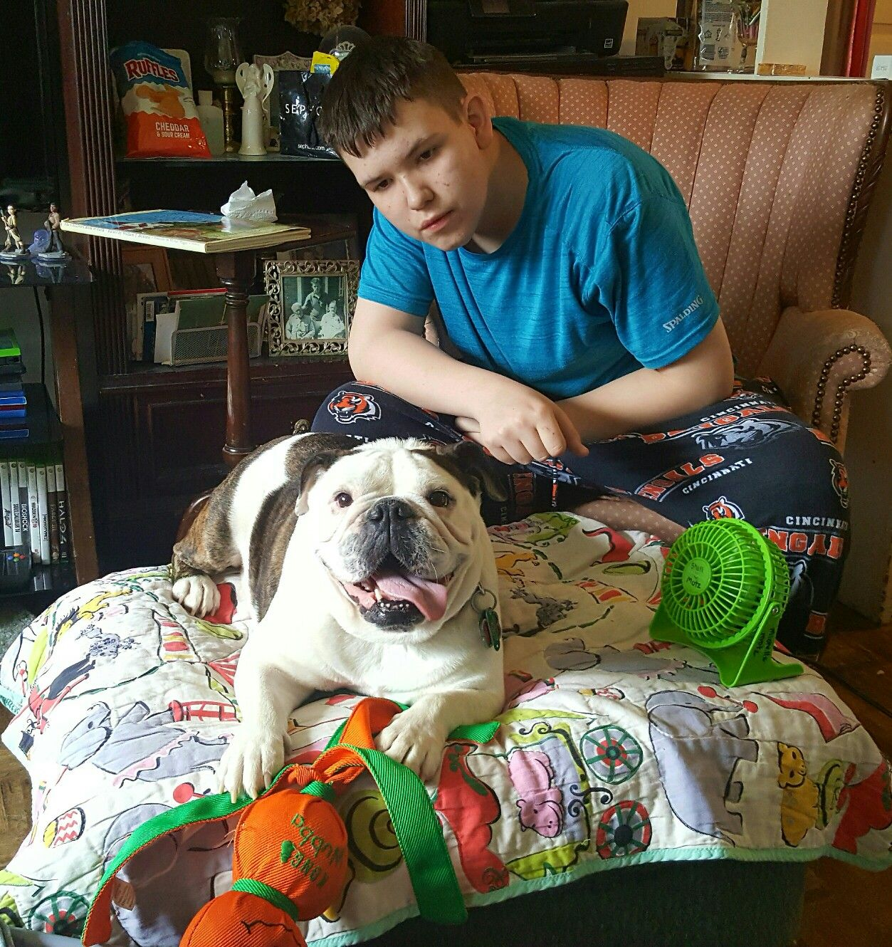 English Bulldog Health Issues, Grooming, and Living Conditions