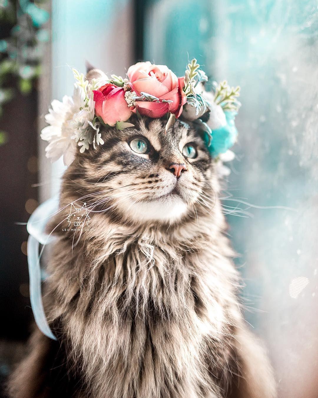 Elle confectionne d'adorables couronnes de fleurs pour célébrer la majestuosité des chats