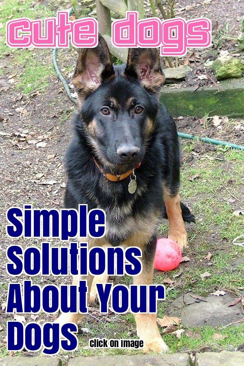 Awesome dog training tips that anyone can use dog