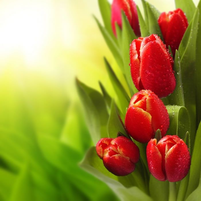 Flowers Around The World The National Flower Every Country H Flowers Tulips Tulip Bulbs