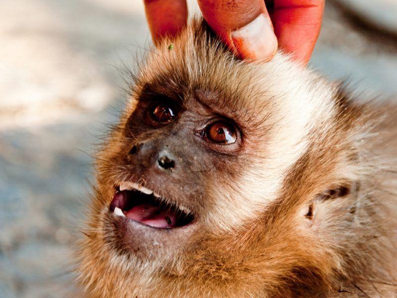 Affen als Haustier Affe als haustier, Haustiere, Katze video