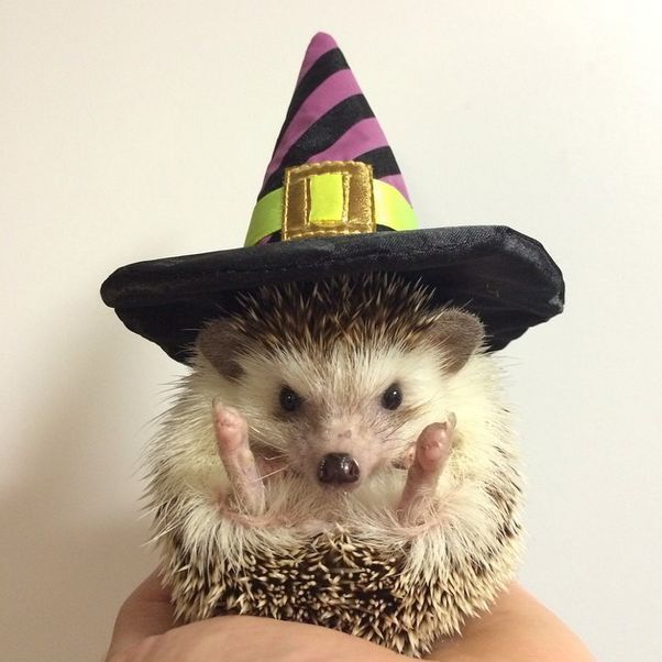 #TeenTimes #Halloween #PetCostumes #HalloweenCostumes #Spooky #Boo #Scary #Cute #Pets : animals in halloween costumes  - Germanpascual.Com