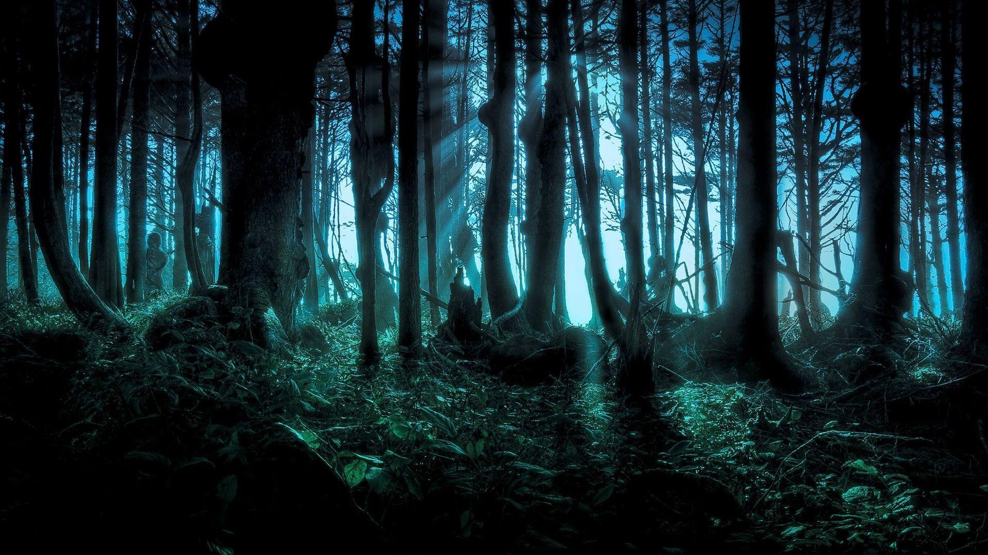 Fantasy Forest Wallpaper 1920x1080 Google Search Fantasy