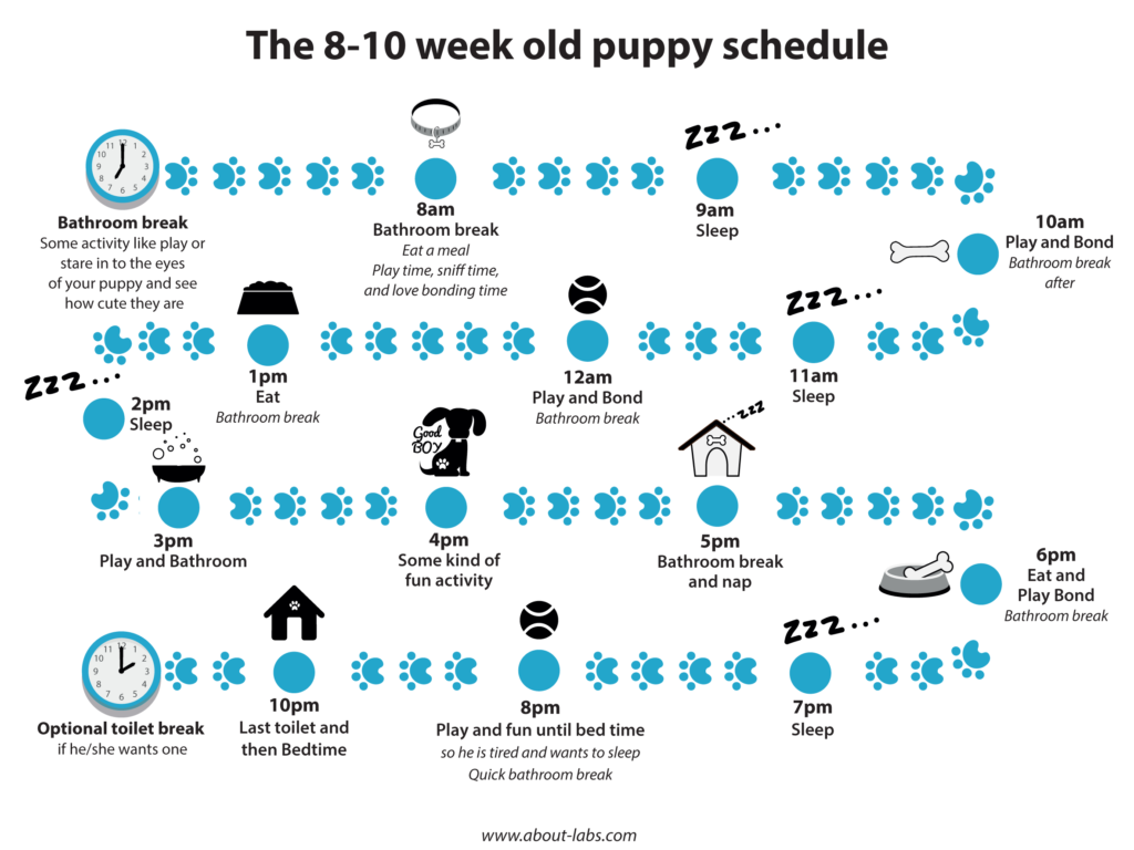 8 Week Old Puppy Schedule Puppy schedule, Training your