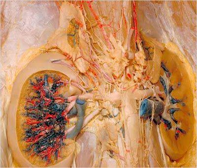 Dr. Sous: dissecção Humano (ATENÇÃO conteúdo muito gráfico)