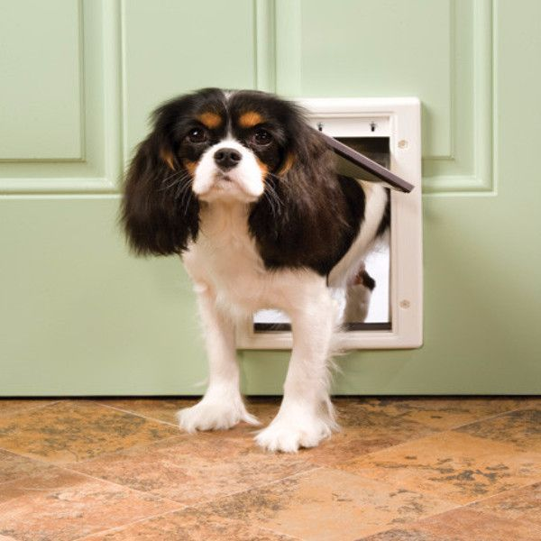Petsafe Plastic Dog Door Small Bd Luxe Dogs Supplies King Charles Cavalier Spaniel Puppy Cavalier King Charles Dog Door