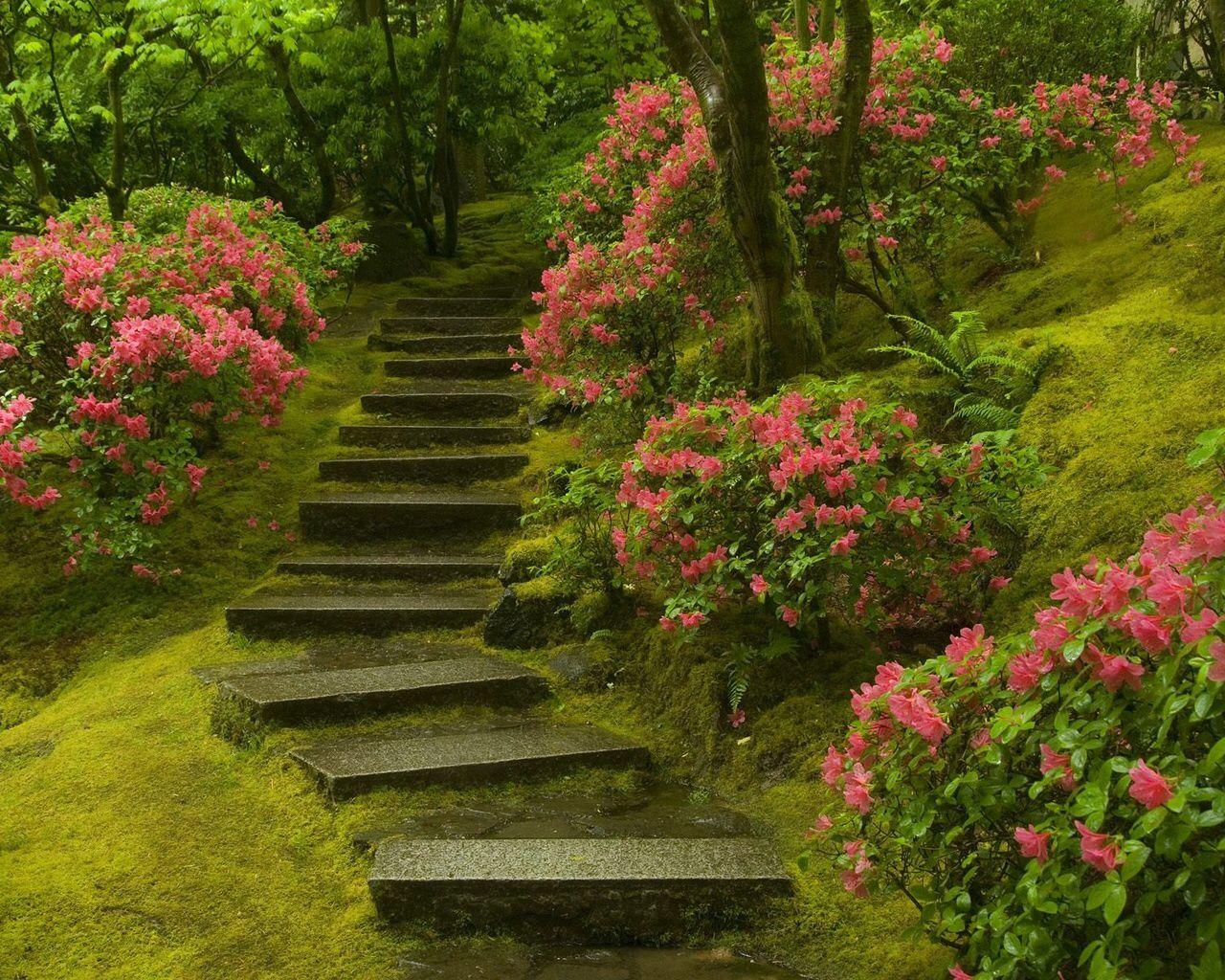 Pinterest Flowers: Flowers & Flower Gardens