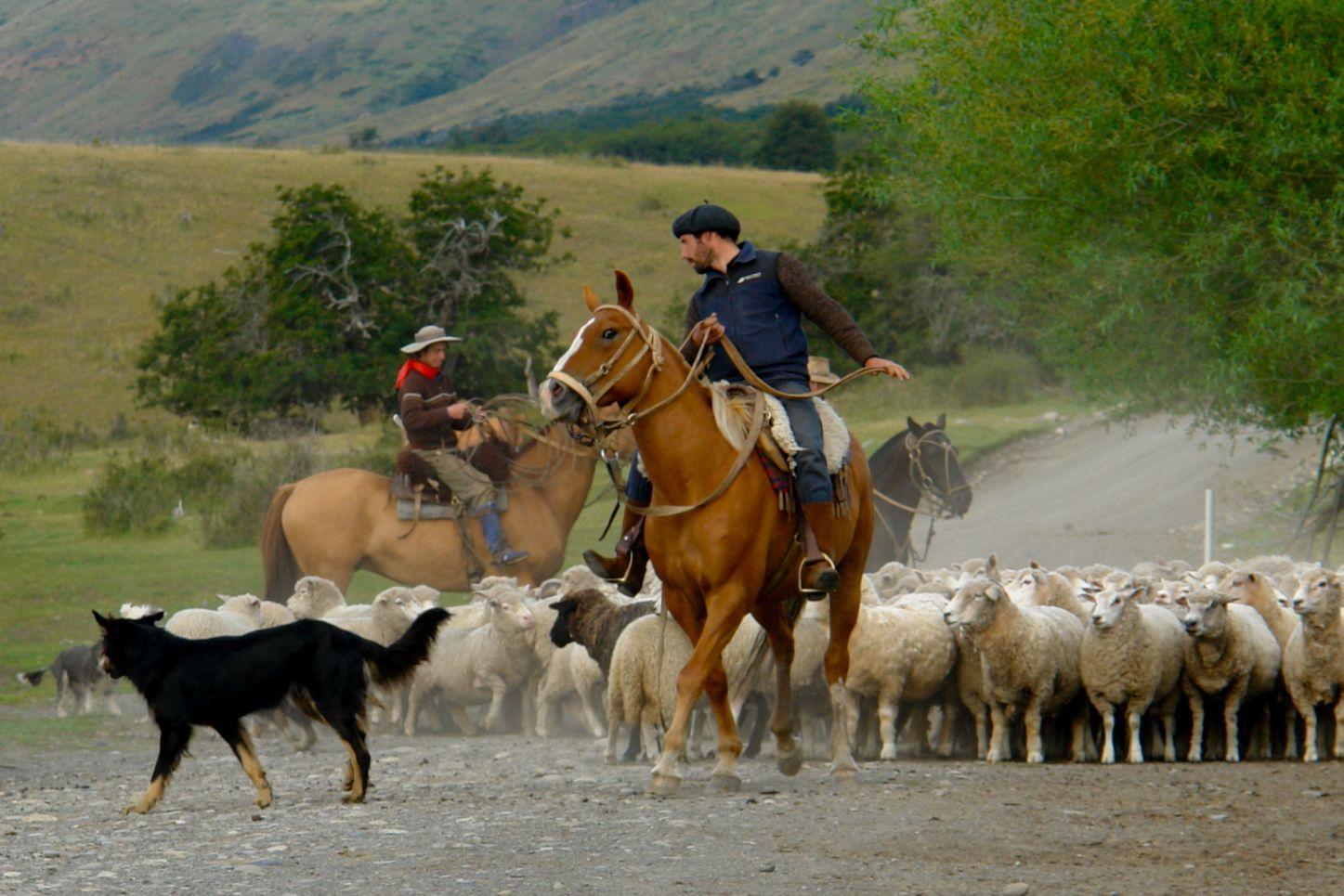 An american gaucho in argentina essay