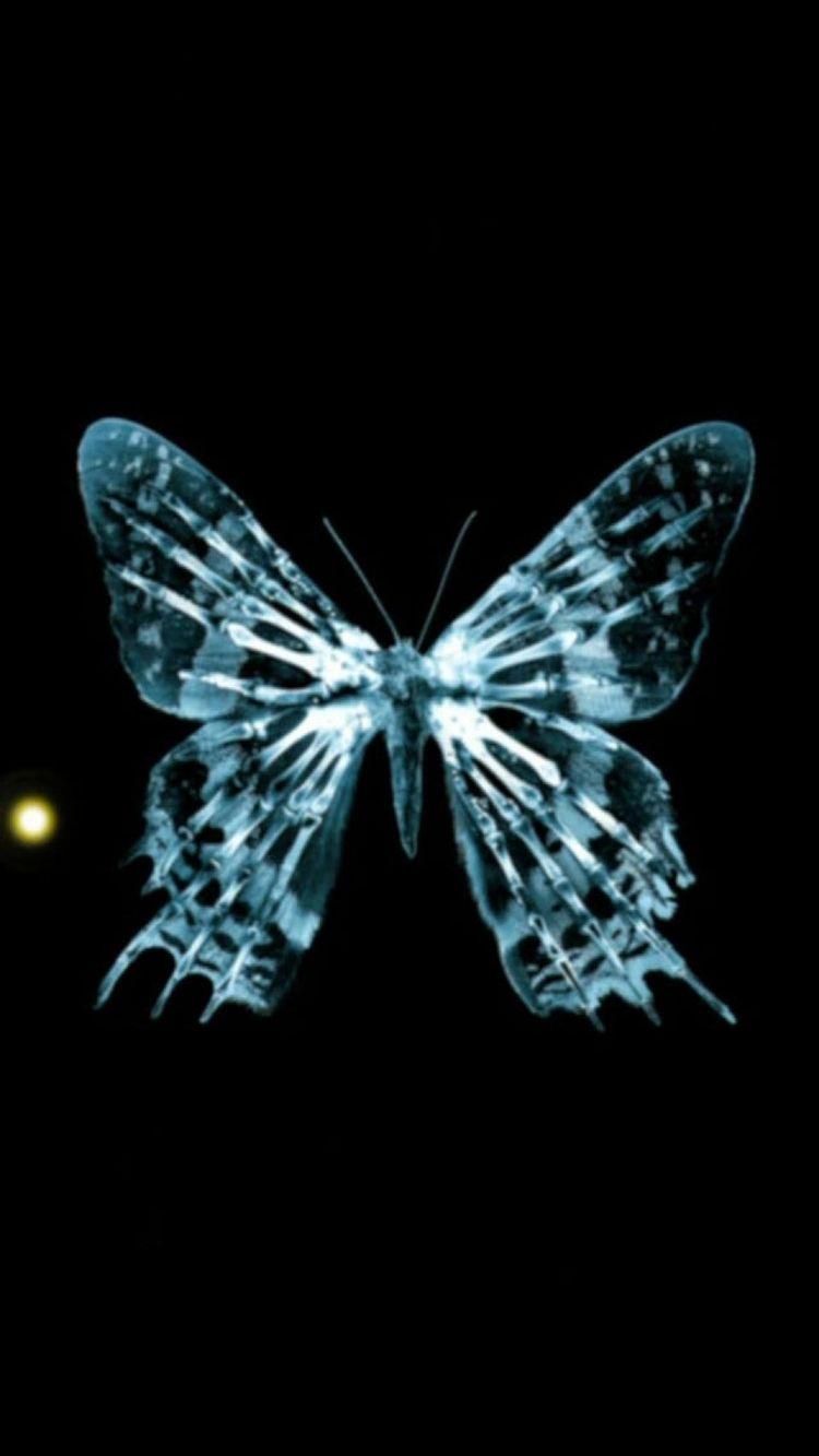 Xraying A Butterfly From Iphone Iphone6wallpaper Com 3d Wallpaper Iphone 6 Wallpaper Wallpaper Retina Wallpaper