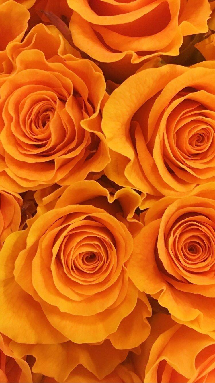 My orange week🧡🍊🔥  Did you like it?🦁🦊💥  #newreel #newreels #fashionreels #reelsfashion #reelinstagram #tiktokvideos #styleinspirations…