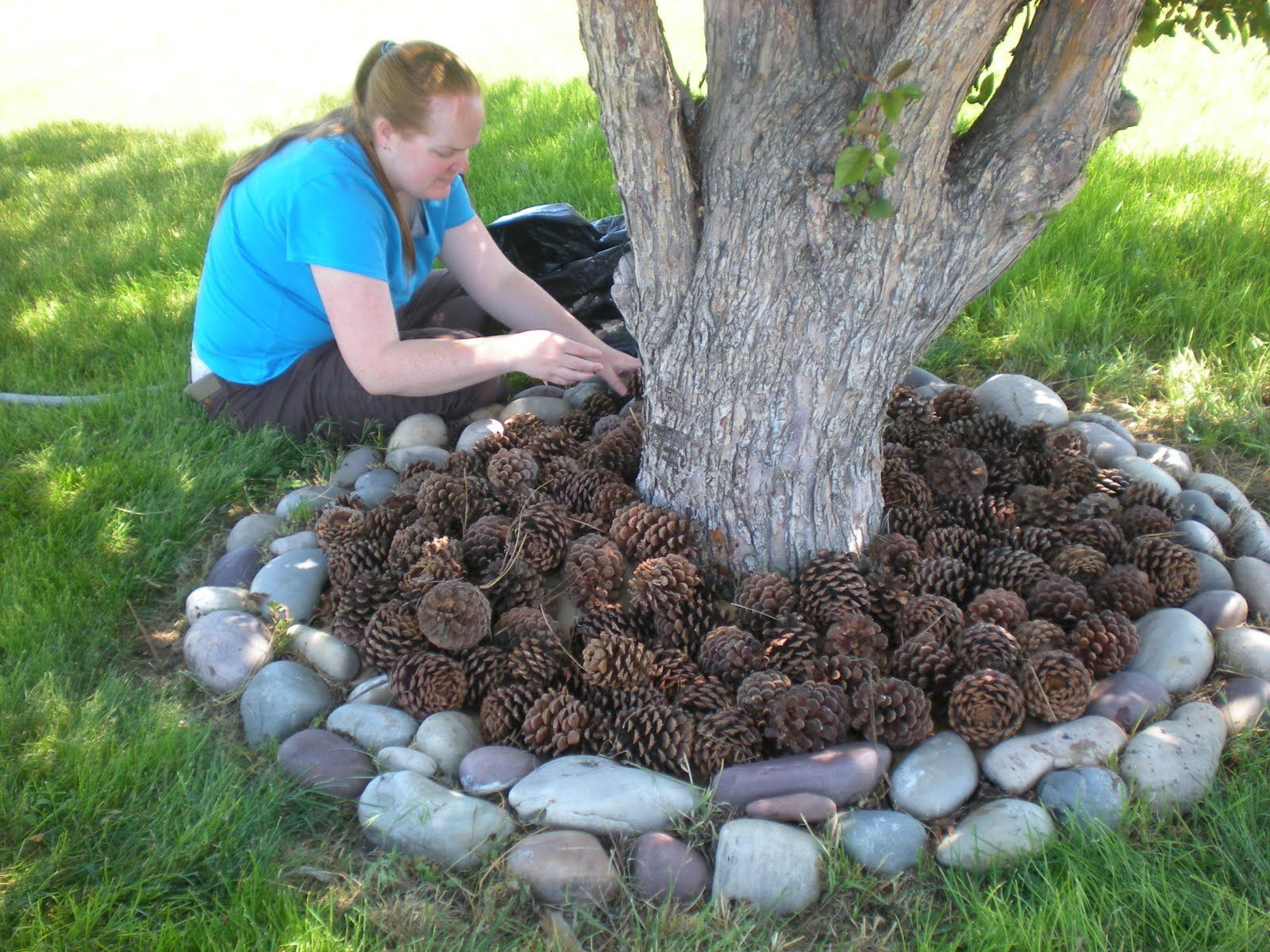 What a great idea! Use pine cones instead of mulch! So I'll be ...