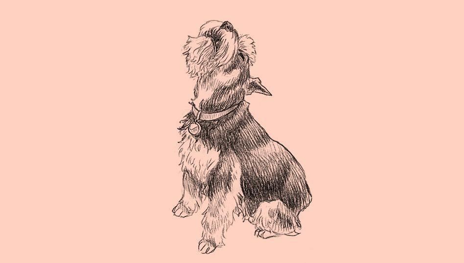 A história das raças de cachorro | Superinteressante