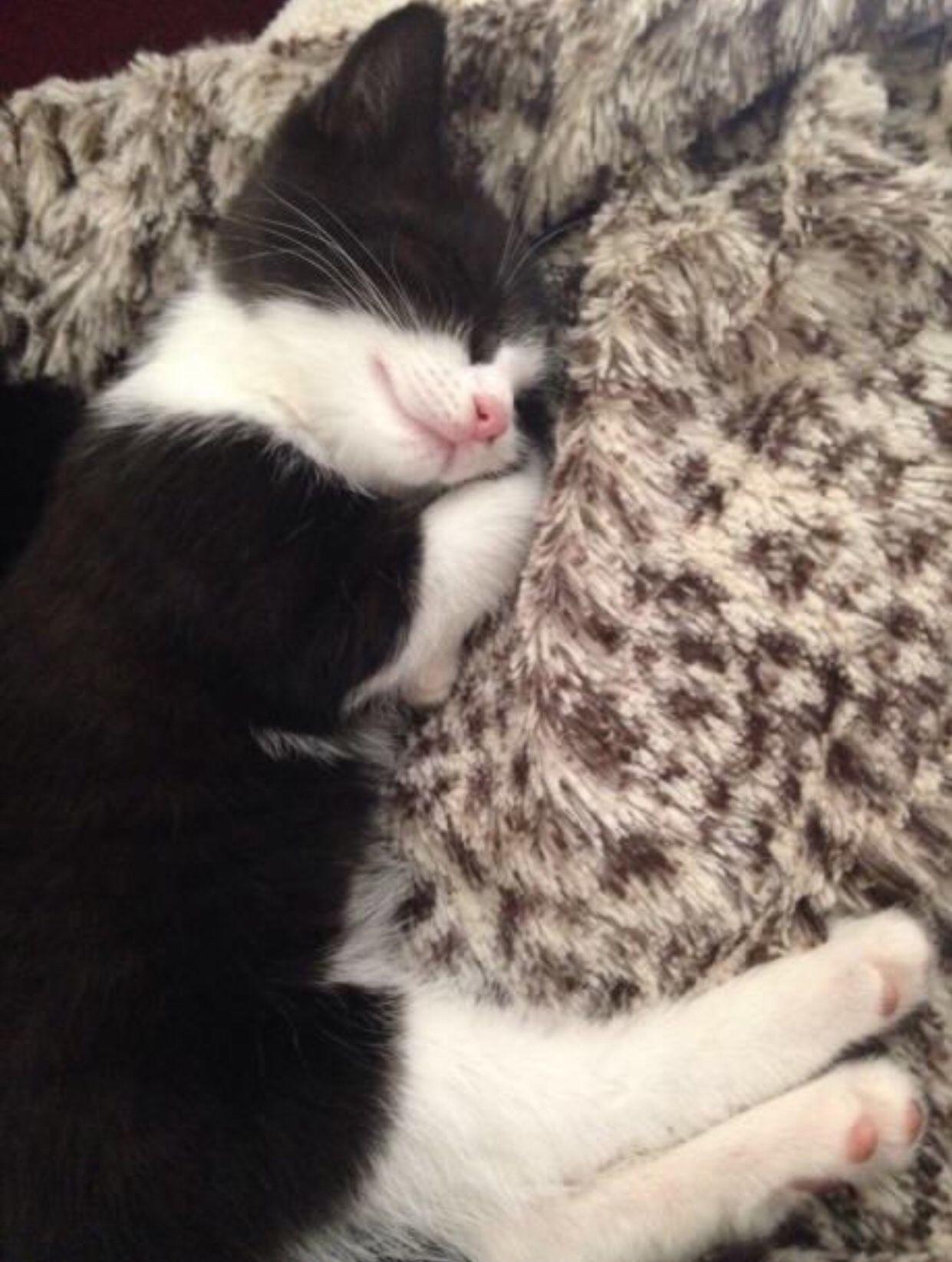 Looking Like My Weekend Sleep Sleeping Kitten Cats Beautiful Cats