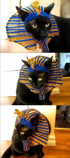 Pharaoh Cat Hat. I ask myself why !!! __ What is FREECABA
