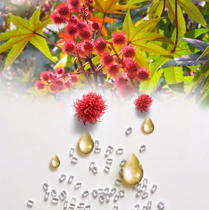 Касторовое масло — естественная защита от болезней и ...