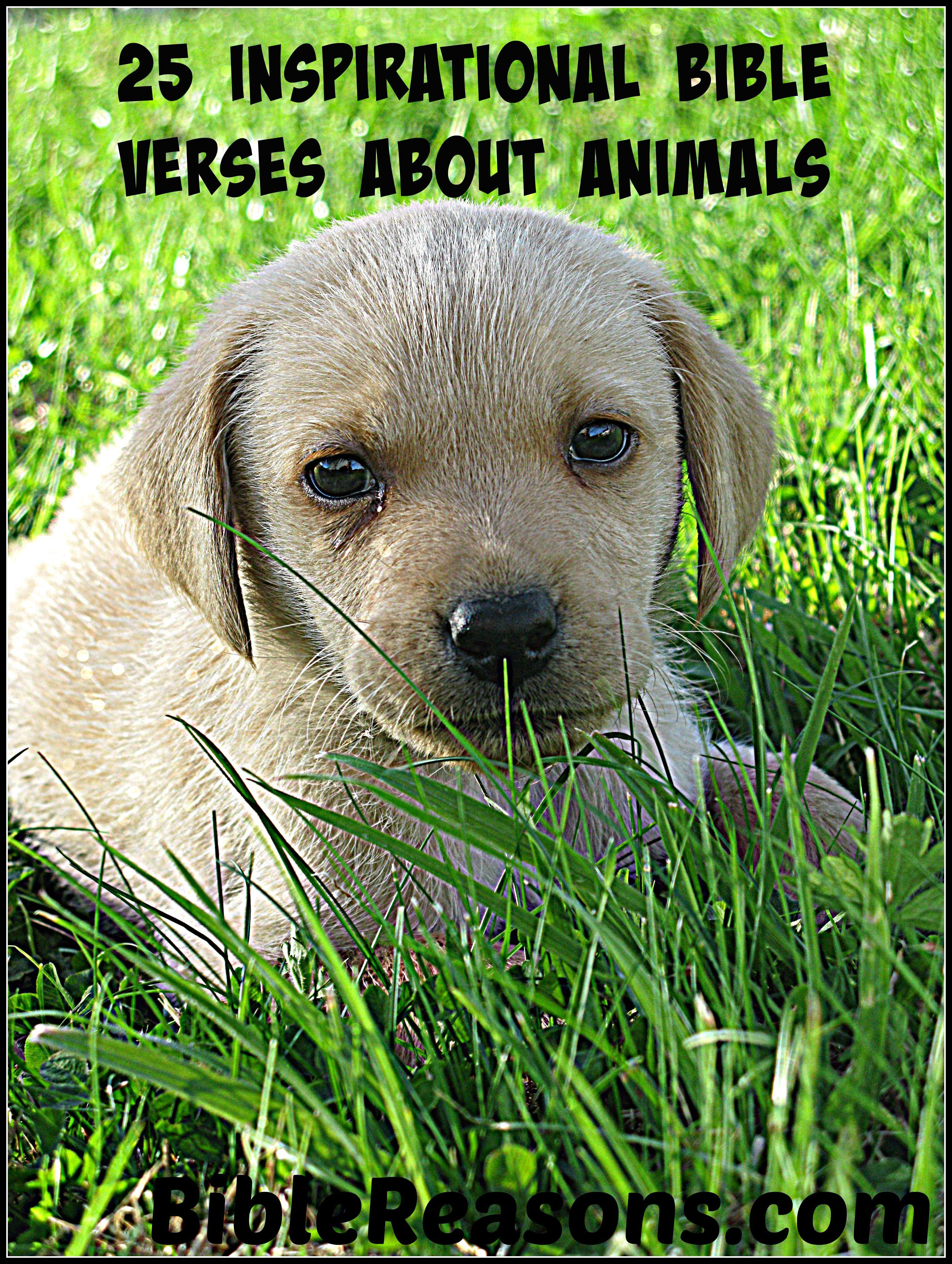 Animals Animals, Puppies, Golden labrador puppies