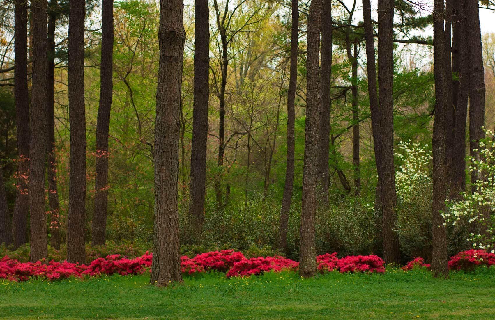 Woodlands   Page   Duke Landscape Architects   Garden   Pinterest ...