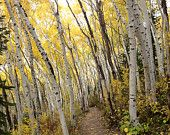 Rob's Trail in the fall, Park City, Utah.  https://www.etsy.com/shop/PhotosByCamilla