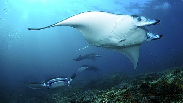Best Places To Go Scuba Diving Komodo National Park South Padre