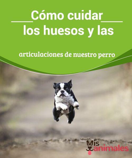 Cómo Cuidar Los Huesos Y Las Articulaciones De Nuestro Perro My Animals Perros Cuidar Animales Mascotas