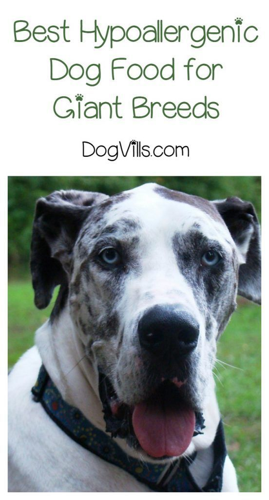 Best Hypoallergenic Dog Food For Giant