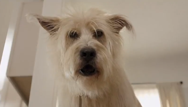 Travelers Insurance Stolen Bone Dog Commercial  Song: Gone by John Hiatt