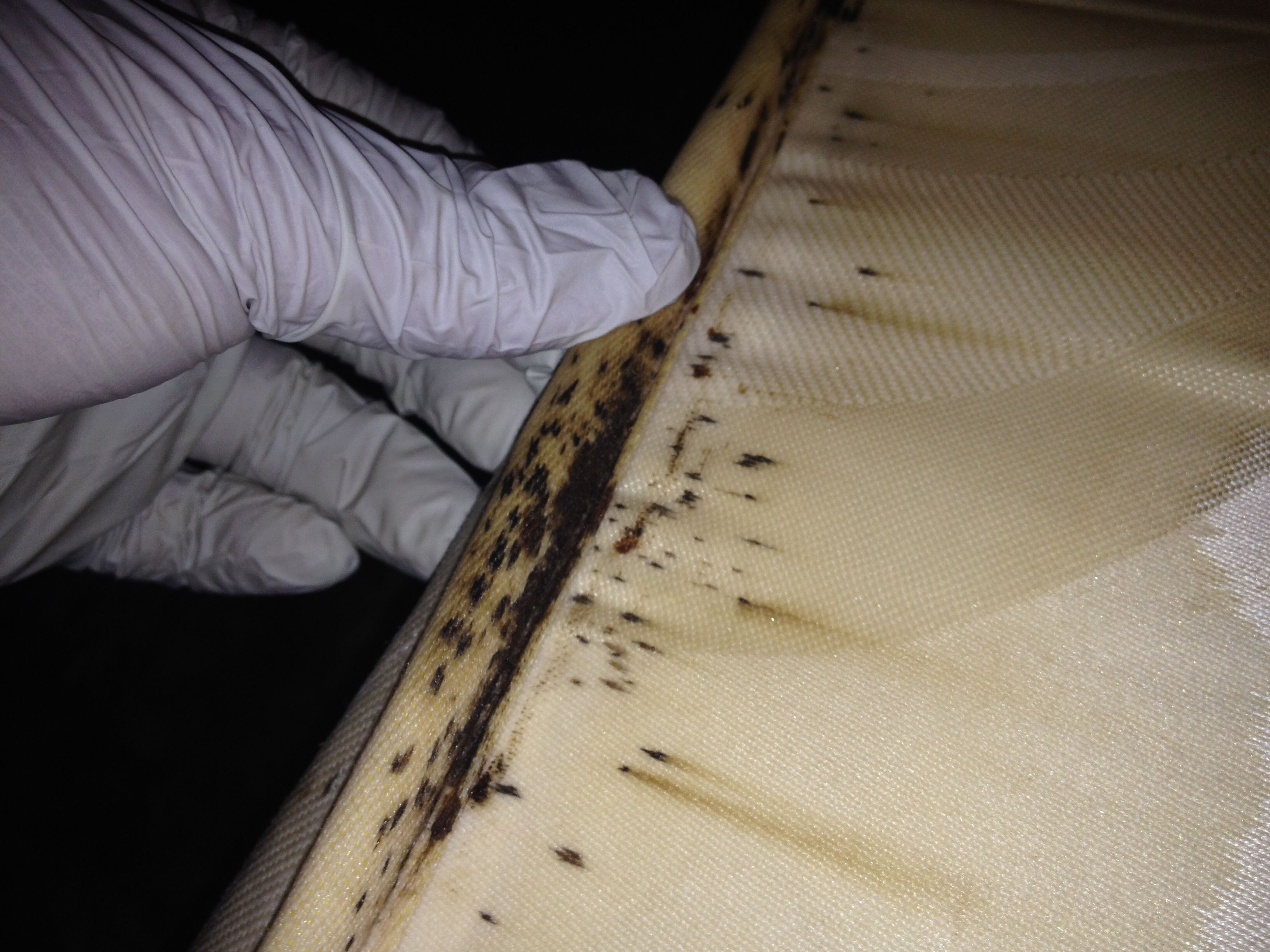 Bed Bug Control Abc Home Commercial Services 8448 North