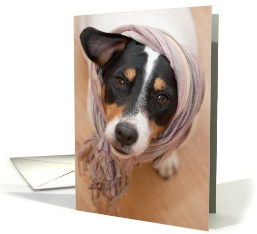 Birthday card cute jack russell dog wearing headscarf card dog birthday card cute jack russell dog wearing headscarf card m4hsunfo