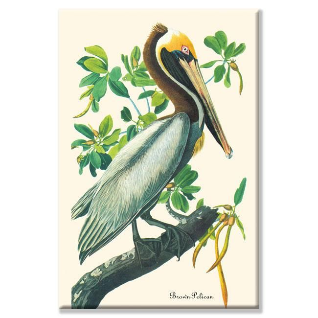 John James Audubon ' Pelican' Art